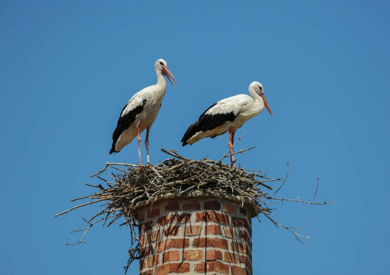 Birds on chimney.
